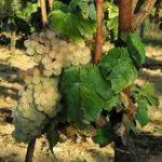 Huelva, rutas. Ruta del vino.