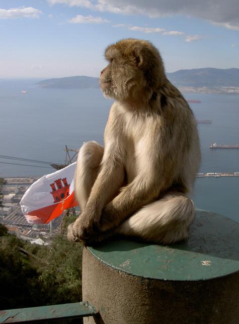 Los Monos de Gibraltar, un atractivo curioso para tu escapada