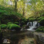 Visita al Parque Natural de Ponga. Destinos naturales de Asturias, escapadas rurales con encanto