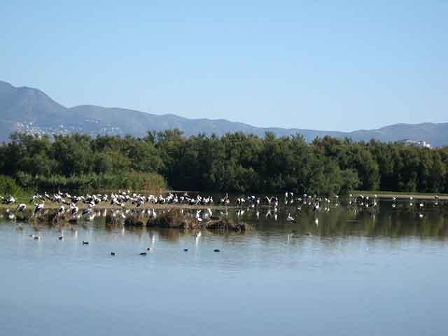 Destinos y rutas en Cataluña: Gerona y el Parque Natural Aiguamolls