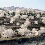 Valle del Jerte. El espectáculo de los cerezos en flor