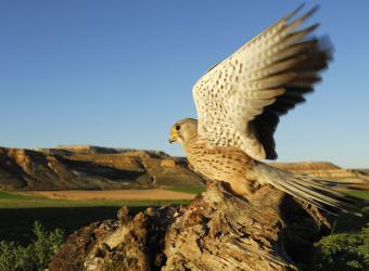 Birdwatching en España | Lugares de interés para la observación de aves