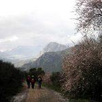 Ruta del Aceite por la Axarquía de Málaga
