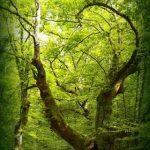 Ecoturismo en Cantabria: Parque Natural Saja-Besaya