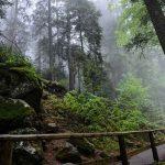 La Selva Negra: Experiencias inolvidables en Alemania