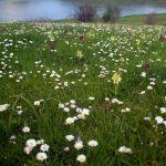 La llegada de la primavera nos sugiere el inicio de grandes escapadas